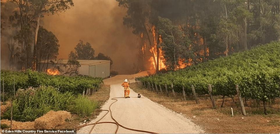 Social Media: Engaging the World in Australia's Bushfire Crisis